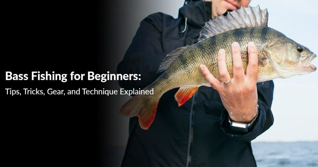 Bass-Fishing-for-Beginners