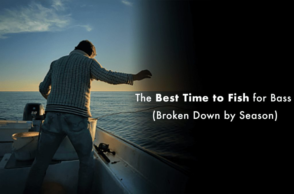 The Best Time to Fish for Bass (Broken Down by Season)