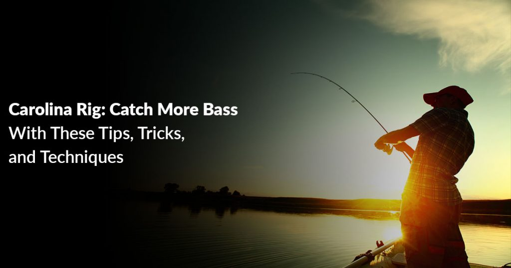Carolina Rig: Catch More Bass With These Tips, Tricks, and Techniques
