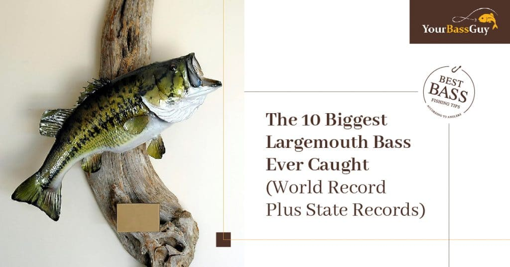 Biggest largemouth bass ever caught featured image