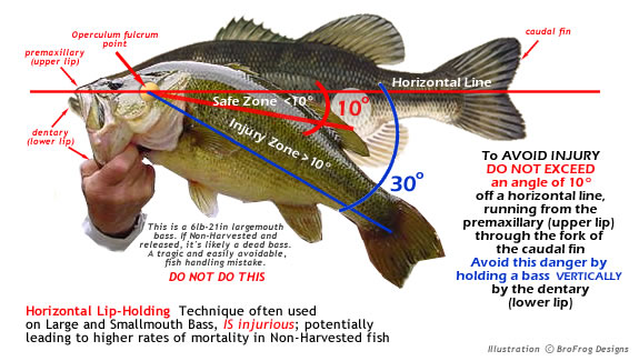 Ways To Hold A Bass