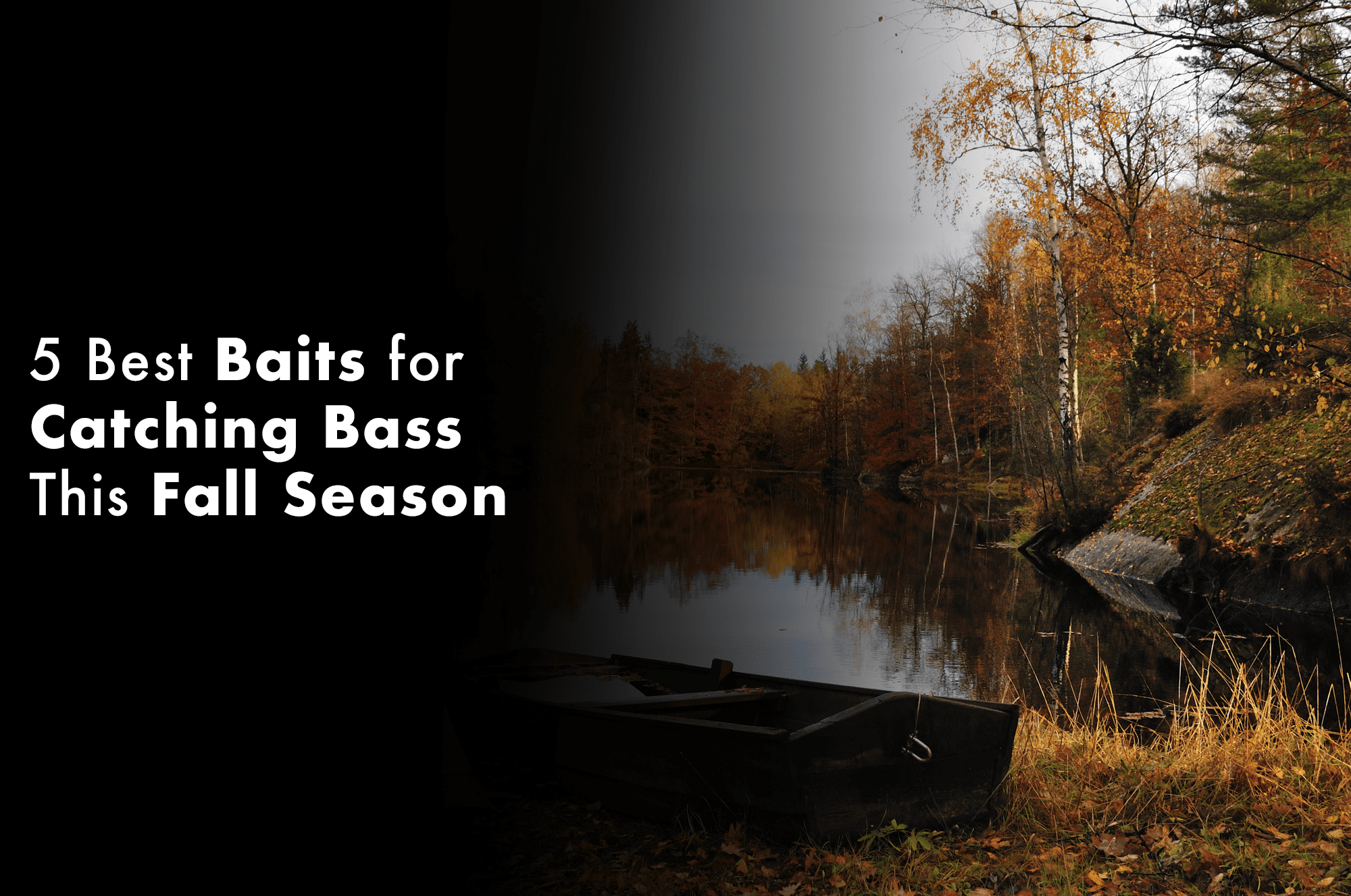 5 Best Baits for Catching Bass This Fall Season