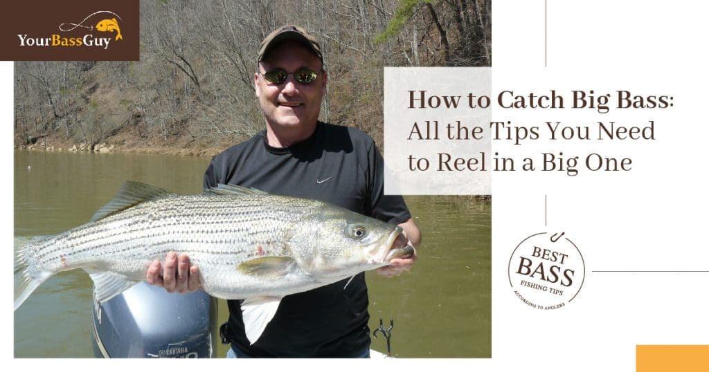 How to catch big bass