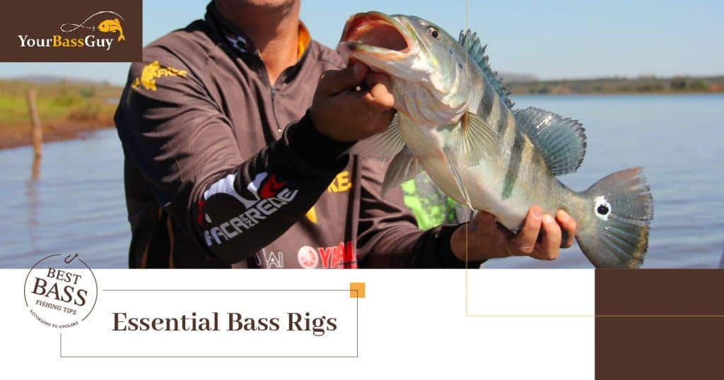 Bass fishing rigs featured image