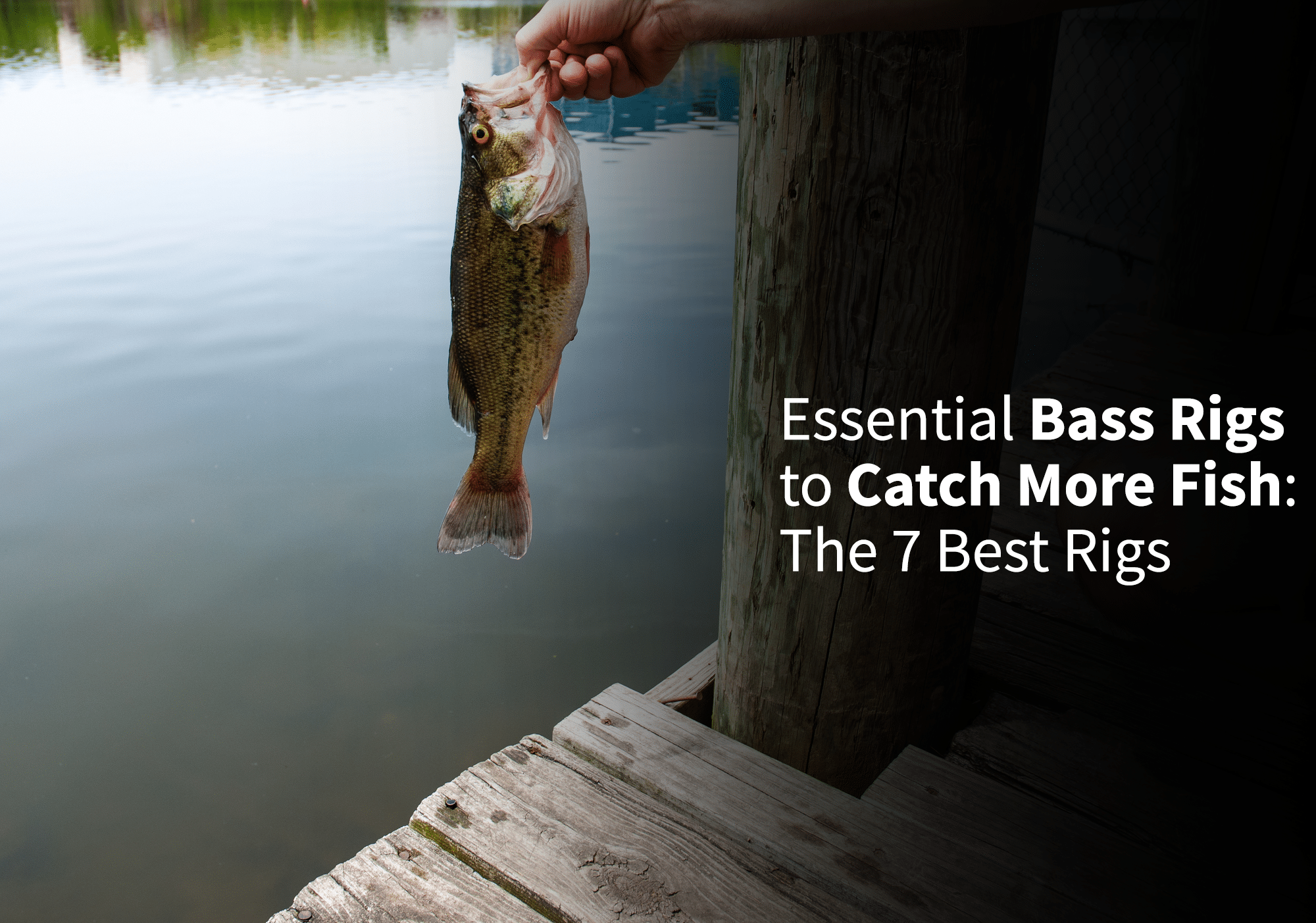 Essential Bass Rigs to Catch More Fish: The 7 Best Rigs
