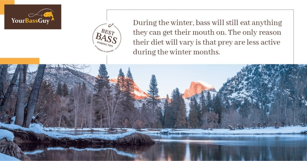 What do bass eat in the winter?