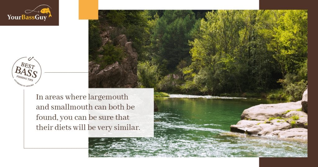 what do smallmouth bass eat