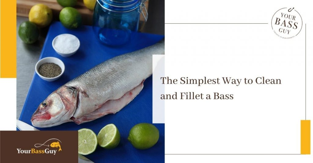 How to fillet bass