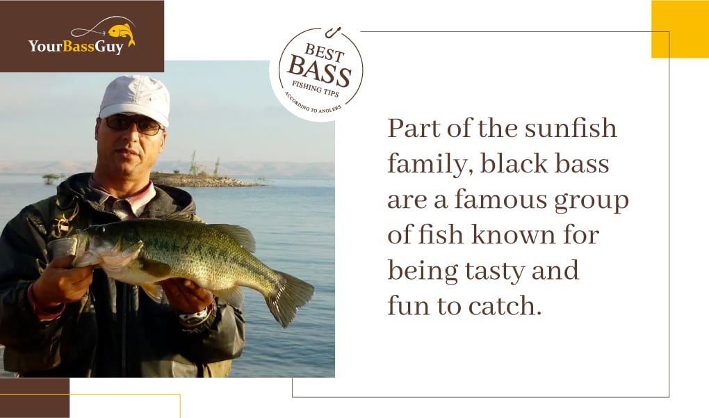 Black bass are part of the sunfish family