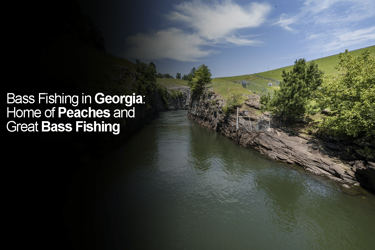 Bass Fishing in Georgia: Home of Peaches and Great Bass Fishing