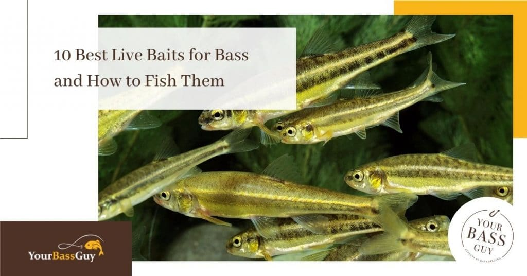 Best live bait for bass