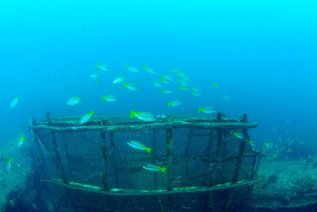 Sunken ship with a school of fish