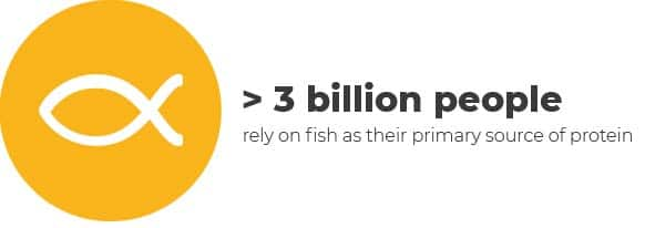 """Overfishing infographic - """"> 3 billion people rely on fish as their primary source of protein"""""""