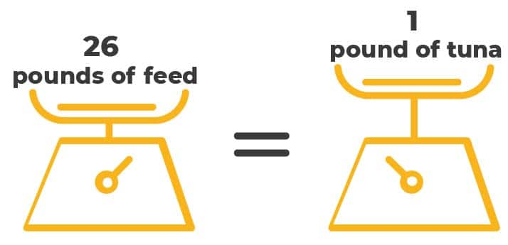 """Overfishing infographic """"26 pounds of feed = 1 pound of tuna"""""""