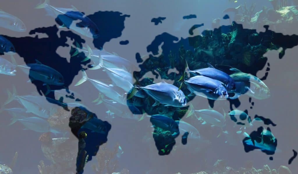 Countries that are overfishing