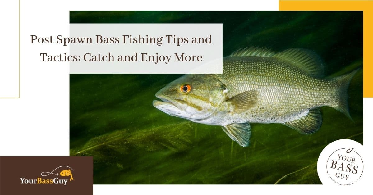 Post Spawn Bass Fishing Tips and Tactics: Catch and Enjoy More