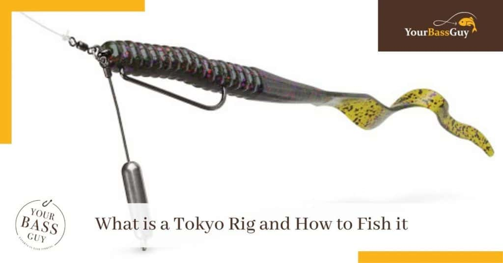 What is a Tokyo Rig and How to Fish it