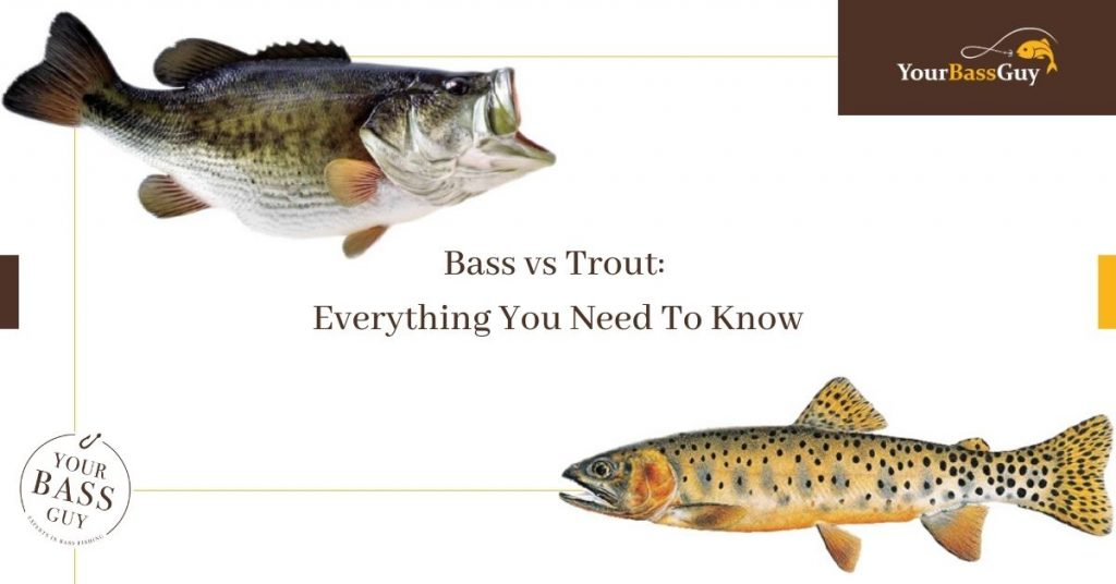 Bass vs Trout: Everything You Need To Know