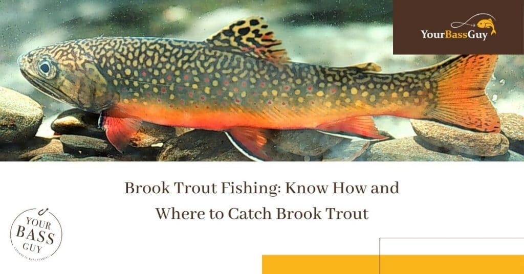 Brook Trout Fishing: Know How and Where to Catch Brook Trout