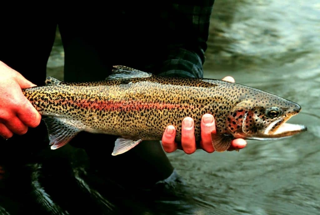 Ideal Components of the Best Spinning Rod for Trout Fishing