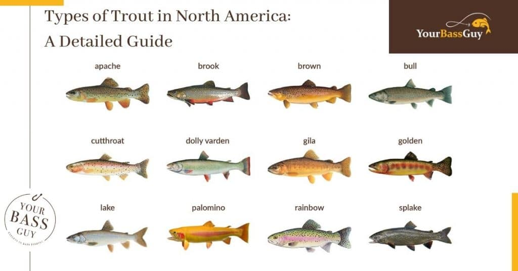 Types of Trout in North America: A Detailed Guide