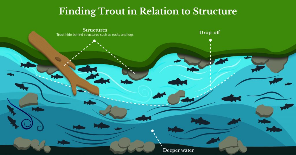 Finding trout in relation to structure