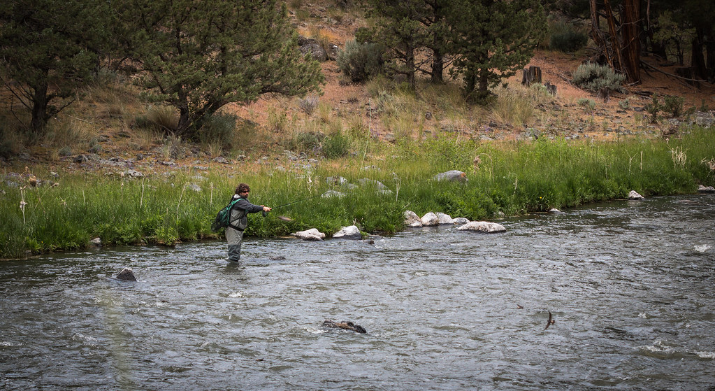 Fishing for trout in moving water